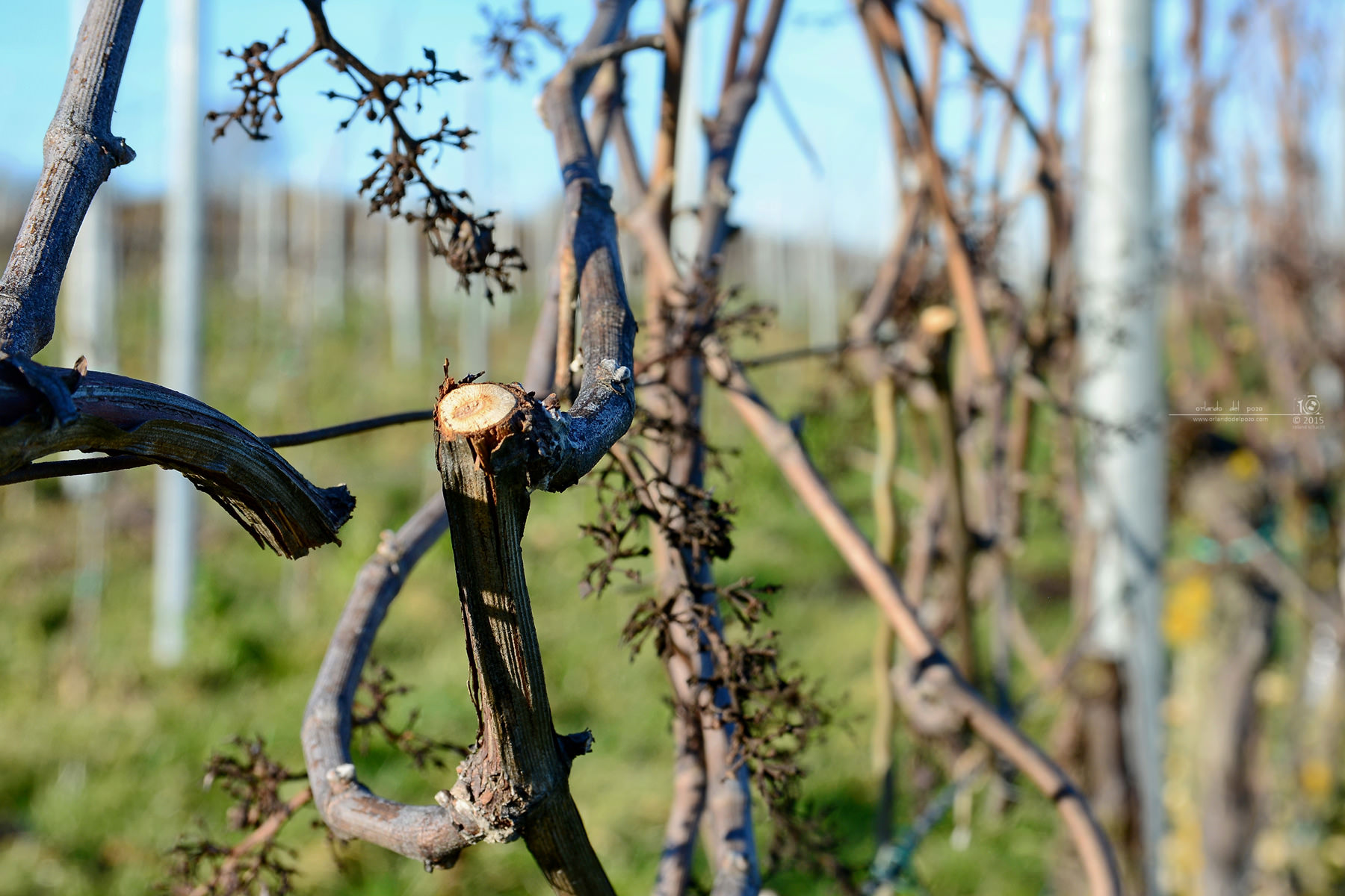 rückschnitt - pruning